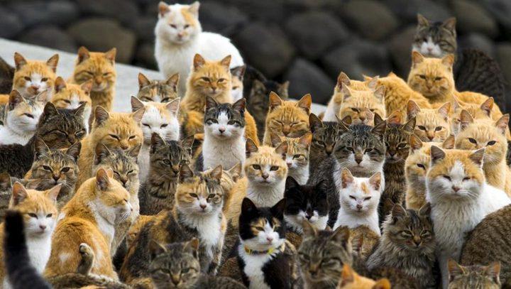 بالنقانق السامة.. أستراليا تخطط لإبادة 2 مليون قطة