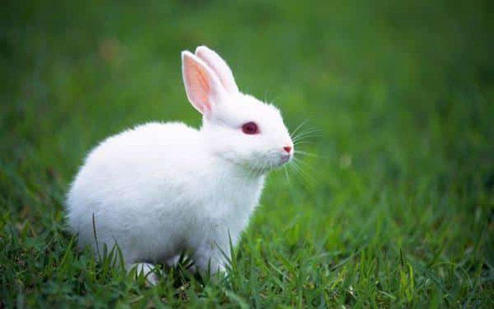 """""""صورة"""" ألعاب نارية تتسبب في مجزرة للأرانب بالصين"""