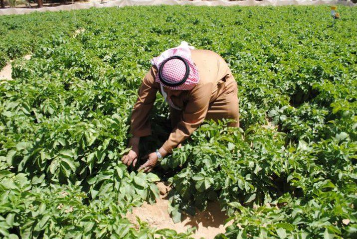 وزير الزراعة: أعددنا خطة شاملة لثلاثة أشهر لتعزيز صمود المزارعين