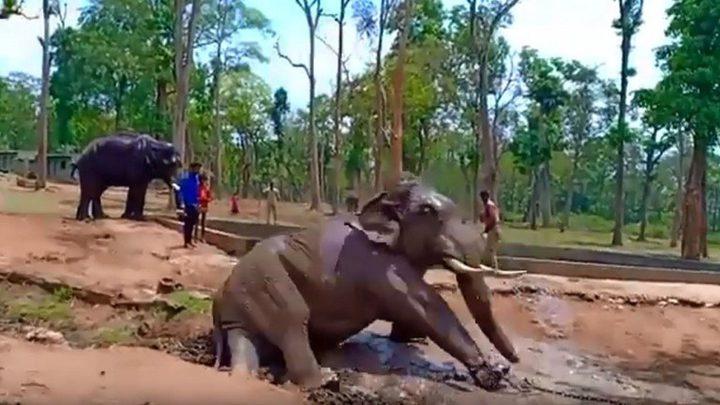 """بالفيديو.. نفوق فيل وقع في """"أسر"""" البشر!"""