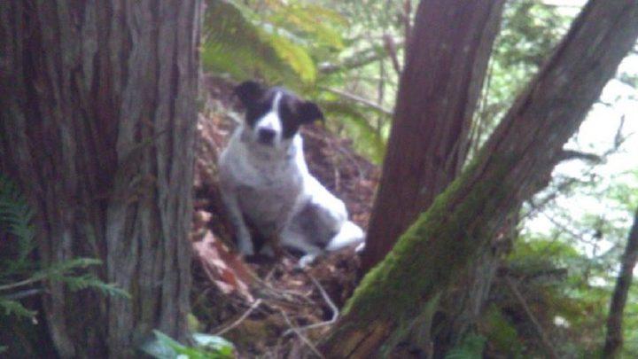 كلب يعثر على جثة صاحبه بعد فقدانه