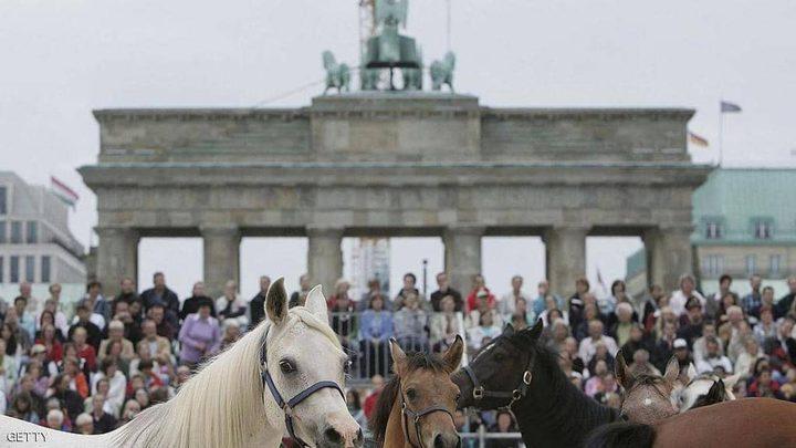 فرس عربية تبلغ من العمر 22 عاما تثير ضجة كبيرة في ألمانيا