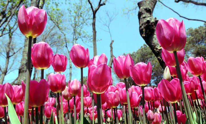 10 آلاف دولار غرامة لمن يقطف زهرة نادرة في تركيا