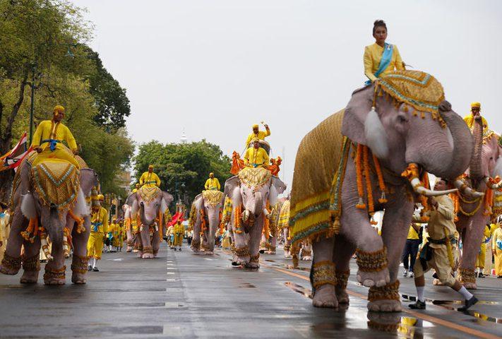 """""""مسيرة أفيال"""" لتحية الملك الجديد في تايلاند"""