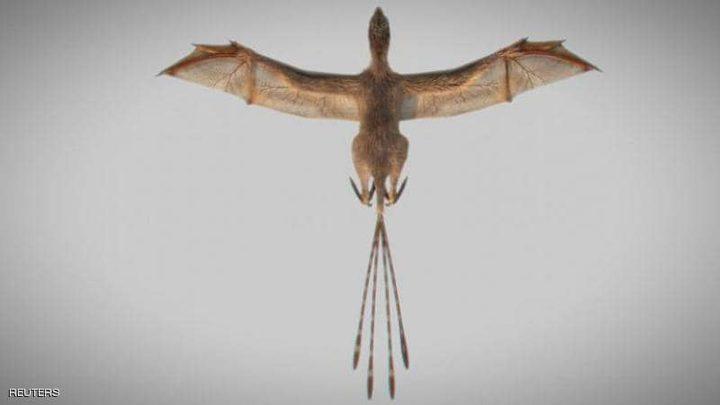 """أحفورة ديناصور مجنح تسبب تحولا مثيرا في """"تطور الطيور"""""""