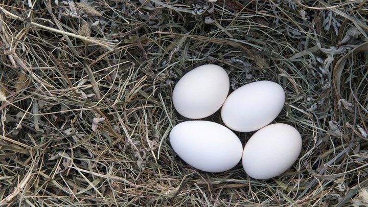 تناول البيض بانتظام يحمي من فقدان البصر