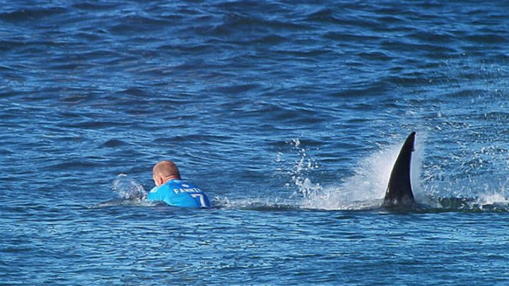 قرش تمزق ساق راكب أمواج حتى الموت!