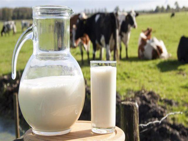 ما الفرق بين حليب الماعز وحليب البقر؟