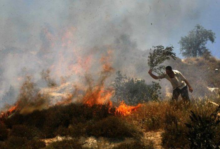 مستوطنون يضرمون النار بحقول زراعية جنوب نابلس