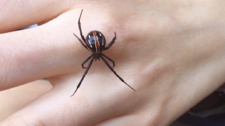 شابة تلاعب ضيفها العنكبوت بضوء الليزر (فيديو)