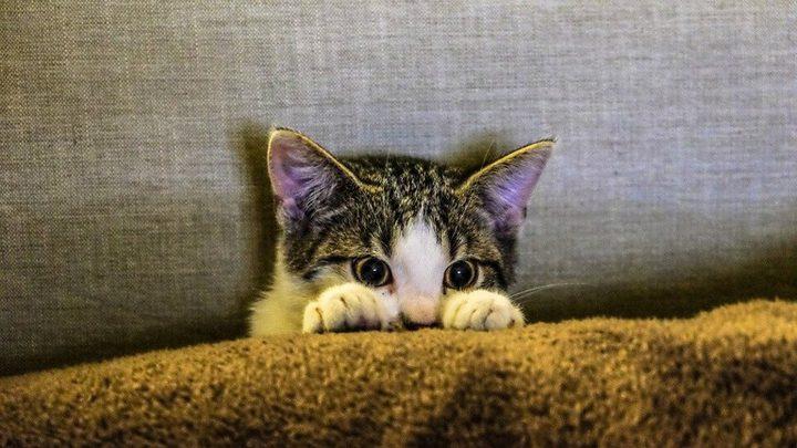 قطة تتابع مسلسلا تلفزيونيا بشغف وتتفاعل مع المشاهد!