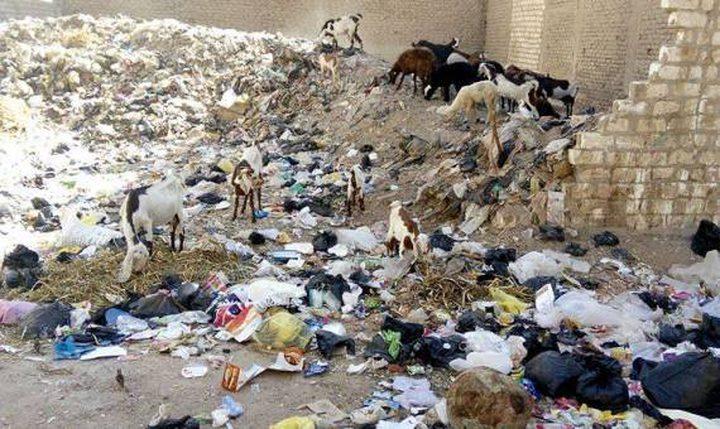 رعي الأغنام على النفايات ظاهرة بحاجة لإعادة النظر في غزة