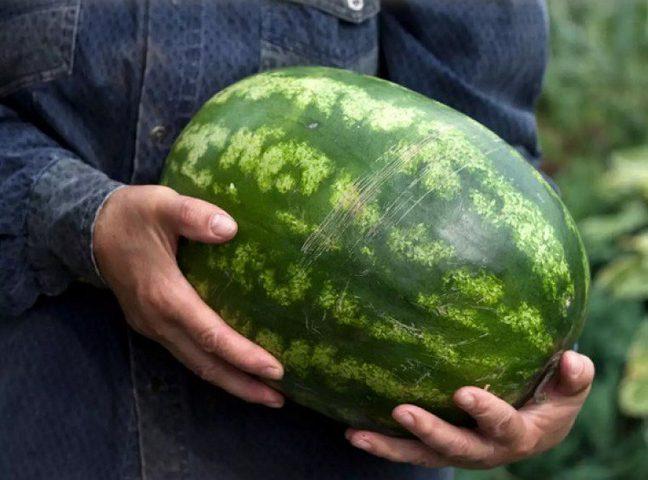 6 خطوات لاخيتار افضل انواع البطيخ