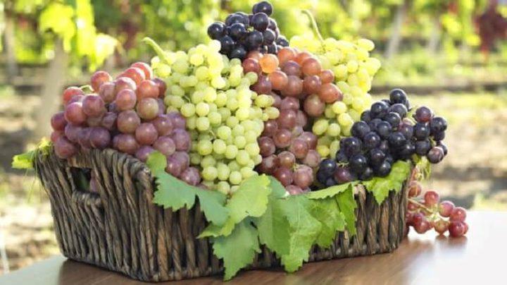 في موسمه.. تعرف على فوائد تناول العنب في رمضان