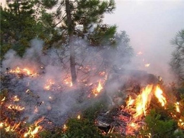 حريق كبير يلتهم 800 شجرة زيتون جنوب جنين