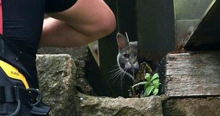 عملية إنقاذ قطة تكلف 5 آلاف إسترليني