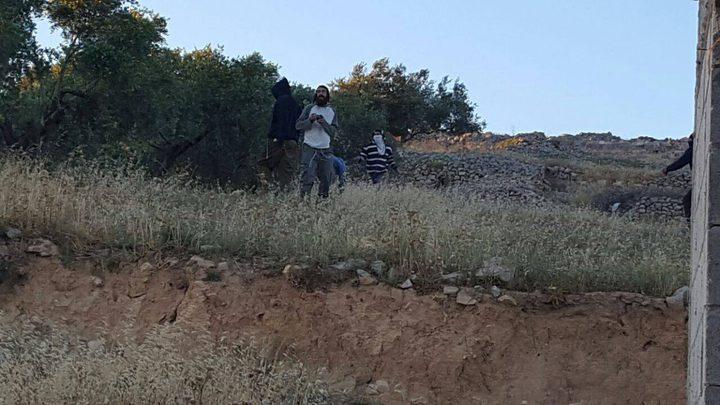 عطاري: حرق المستوطنين لأشجار الزيتون جنوب نابلس عمل فاشي