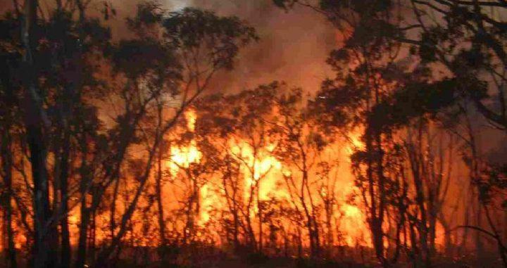 الدفاع المدني يخمد 18حريقا بأشجار زيتون في جنين