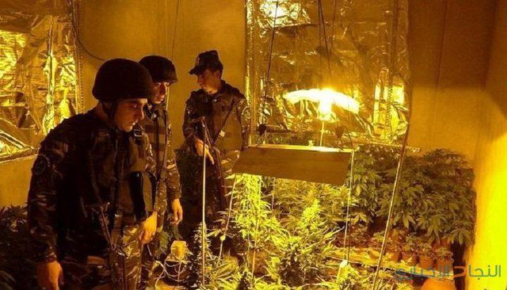 """الوقائي يضبط عبوات بلاستيكية تستخدم لزراعة """"الماريجوانا"""" في جنين"""