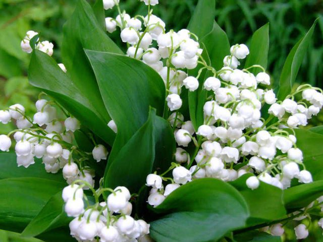 أزهار نادرة يتجاوز سعرها 15 مليون دولار وبعضها لا يقدر بثمن..