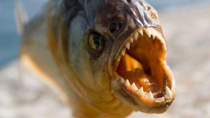 """الزعيم الكوري كيم جونغ يعدم أحد جنرالاته برميه ل""""سمك البيرانا"""""""