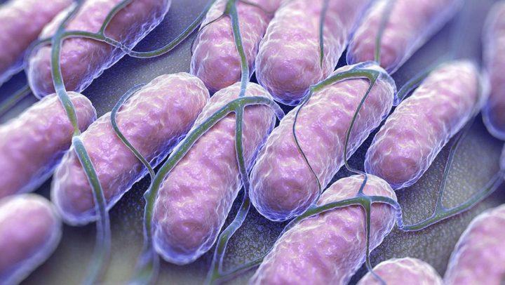 ما هو تأثير بكتيريا السالمونيلا على الجسم ؟