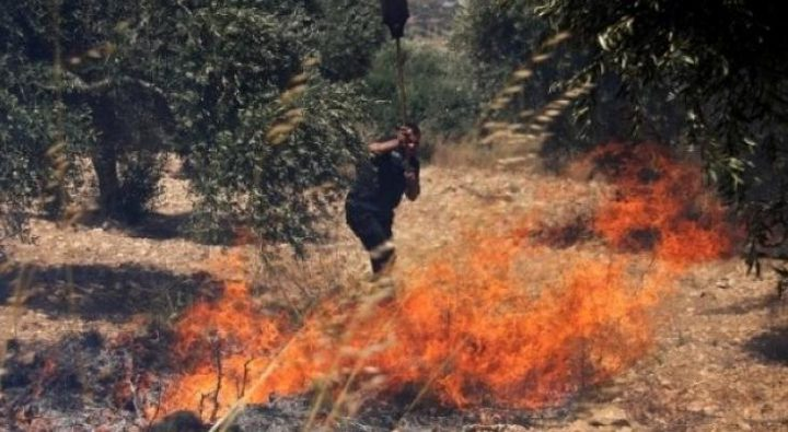 مستوطنون يحرقون أشجار زيتون وتين وعنب في قريتي بيتين وبرقة