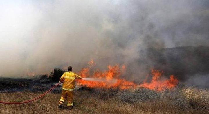 حريق يلتهم 20 دونما مزروعة بالقمح و20 شجرة زيتون