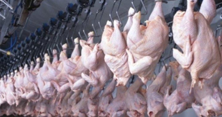 أسعار الدجاج تشهد استقراراً نسبياً في غزة