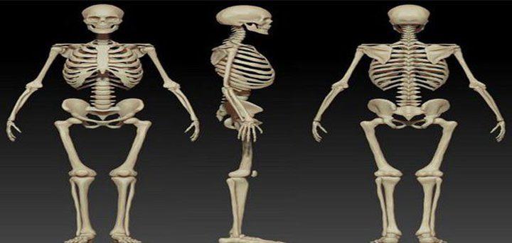 عدد عظام الهيكل العظمى للإنسان.. وما وظائفها؟