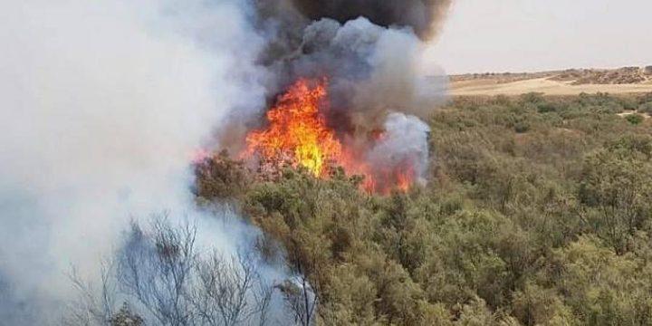 جنين: حريق يلتهم مئات أشجار الزيتون في قرية عانين