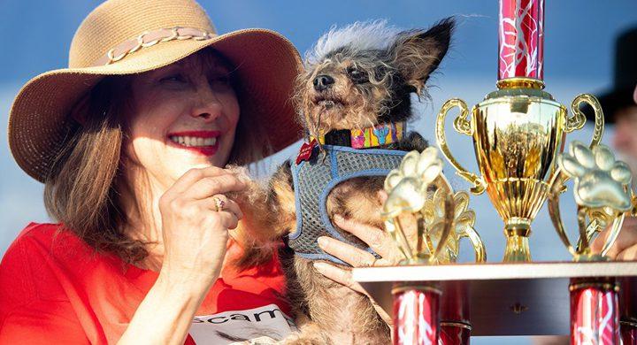 """""""سكامب ترامب"""" يفوز بجائزة أقبح كلب في العالم"""