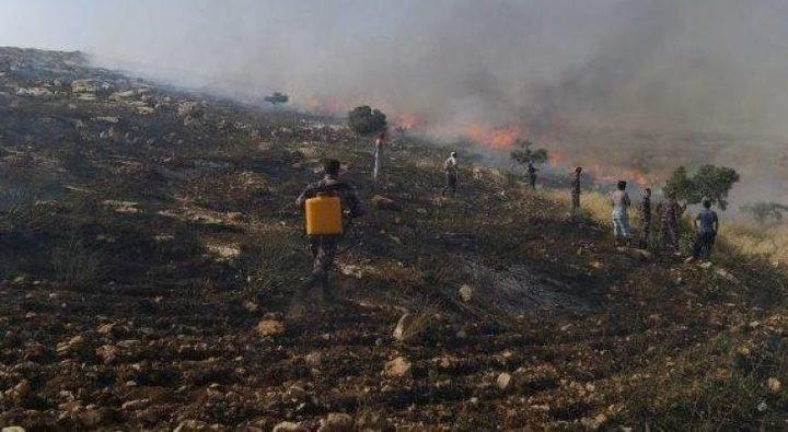 حريق يلتهم أشجار زيتون جنوب غرب جنين