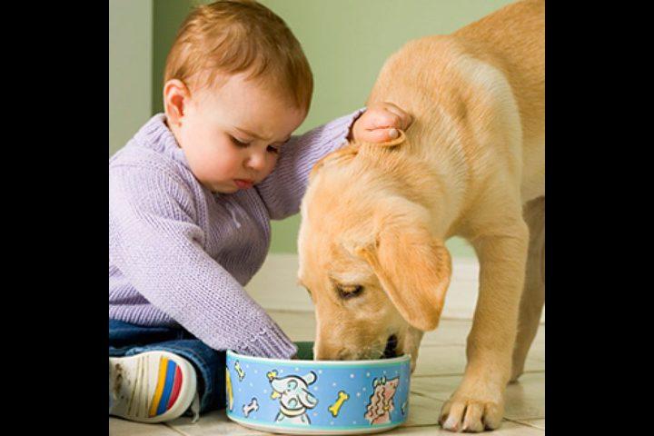 تعرف على الامراض الخطيرة التي تنتقل للانسان من الحيوان