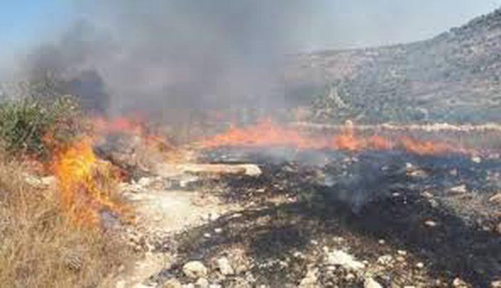 حريق يلتهم 30 شجرة زيتون شرق جنين