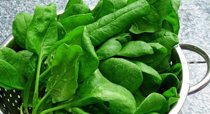 4 أسباب صحية تضع السبانخ على عرش الخضروات الورقية
