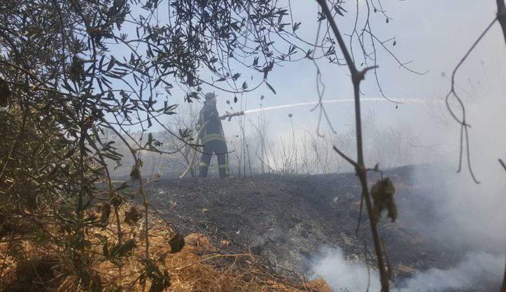 حريق يلتهم مئات الأشجار شمال الخليل