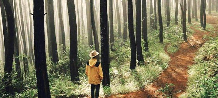 دراسة: المشي في الغابات له تأثير سحري على الاجهاد
