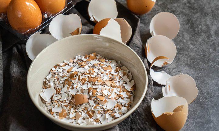 قشر البيض لإعادة إنماء خلايا العظام المكسورة