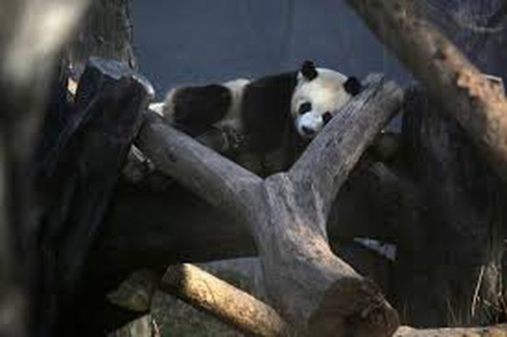 عملية دولية تنقذ آلاف الحيوانات المهددة بالانقراض