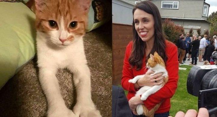 """اعتذار رسمي ونعي بعد وفاة """"قطة"""" رئيسة وزراء نيوزيلندا"""