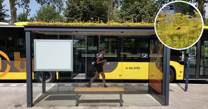 مدينة هولندية تحوّل محطات الحافلات إلى خلايا نحل