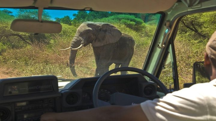 هجوم مرعب لفيل هائج على السياح!