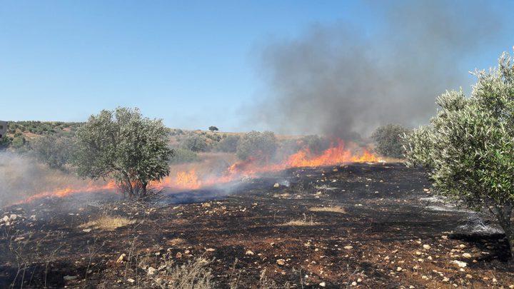 جنين : حريق كبير يلتهم 80 شجرة زيتون