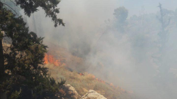 حريق ضخم يلتهم أكثر من 1500 شجرة زيتون جنوب جنين