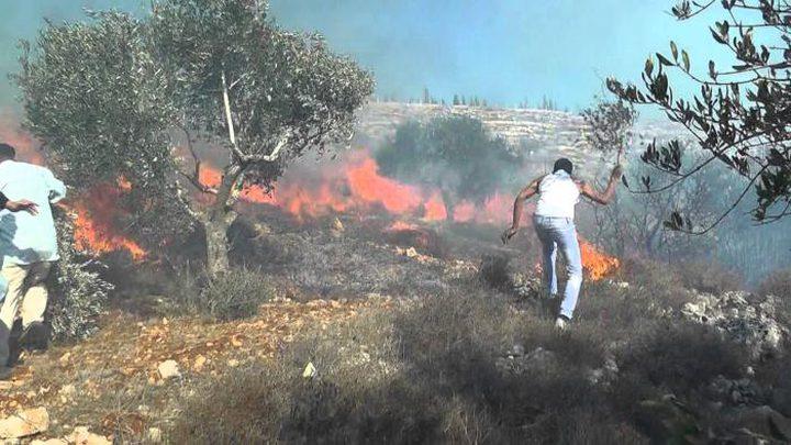 الدفاع المدني يخمد حريقاً التهم 50 دونماً شرق قلقيلية