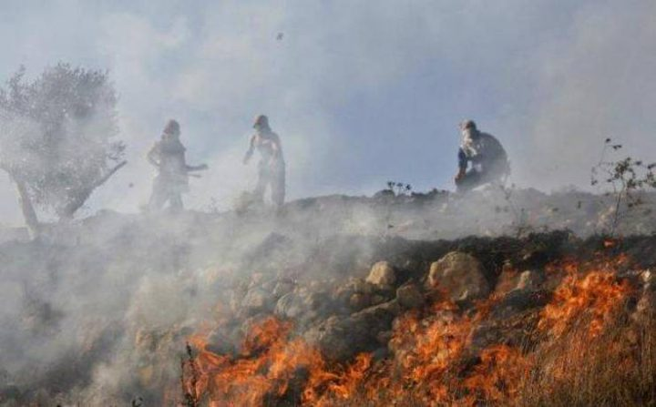 اخماد حريق طال 100 شجرة زيتون في يعبد