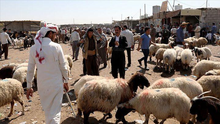 كيف بدت أسعار المواشي في الأسواق العربية عقب عيد الأضحى