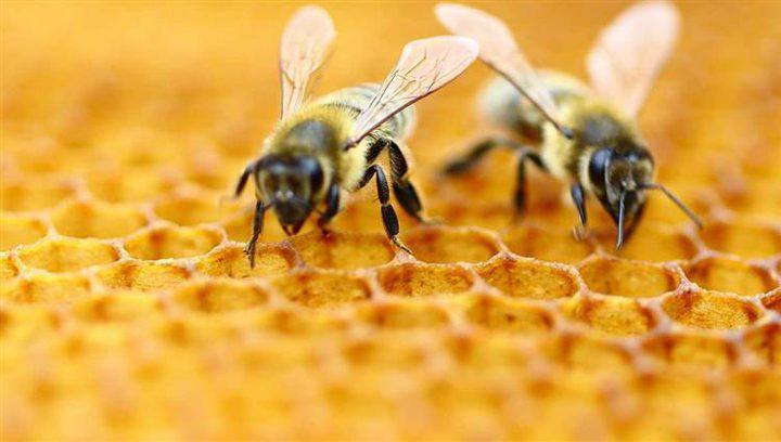 """""""النوم مع النحل"""".. طريقة علاج ناجحة لتخفيف الألم في ليتوانيا"""