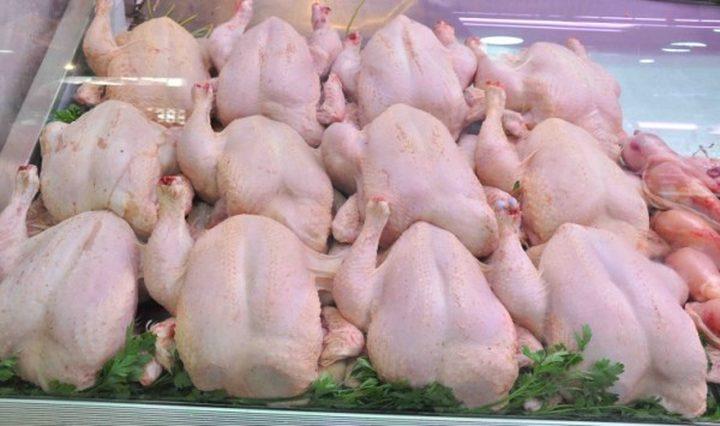 انخفاض على أسعار الدجاج في غزة
